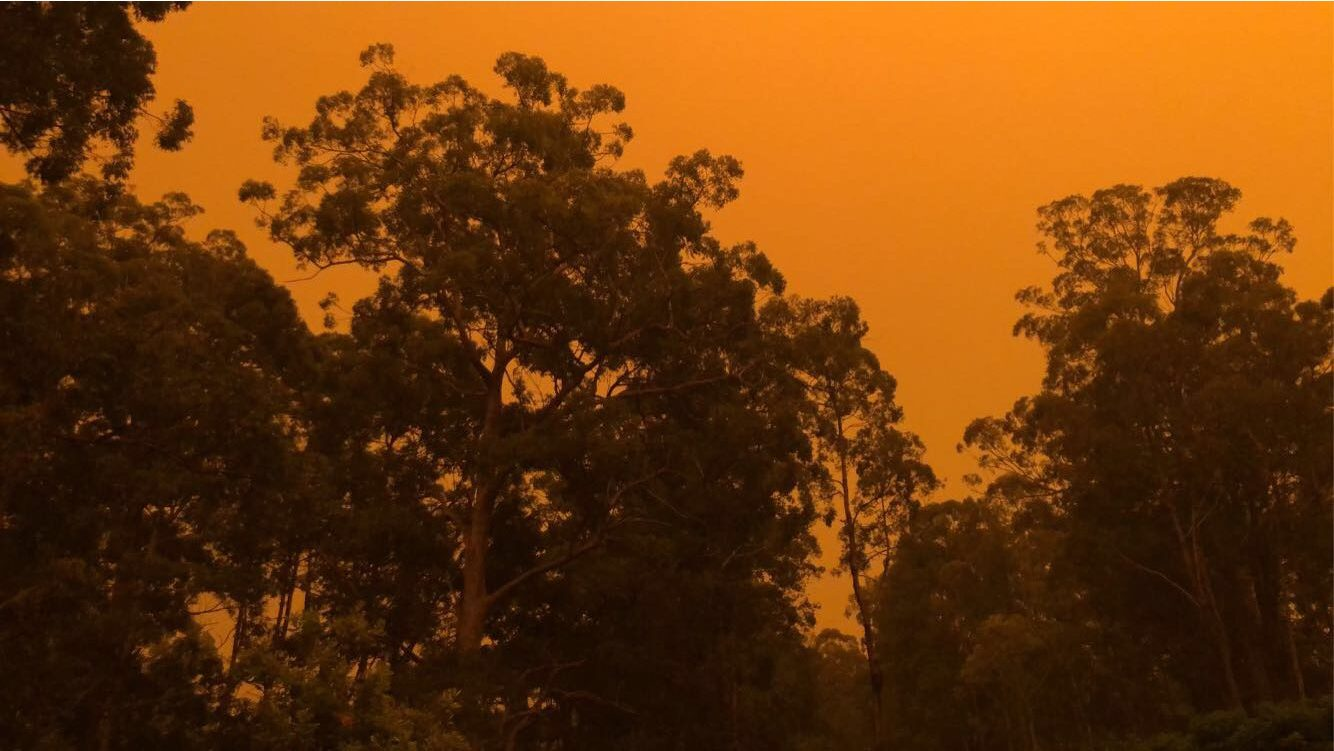 Trees in a smokey haze with orange background