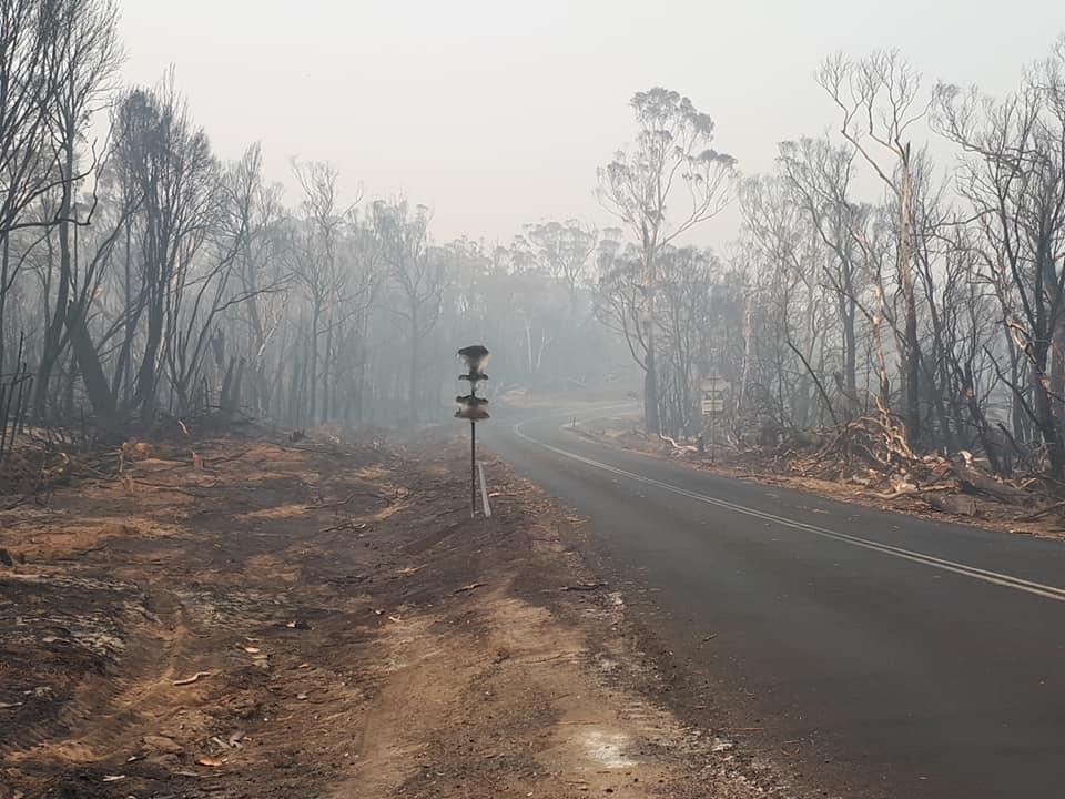 bushfire effected road near Braidwood