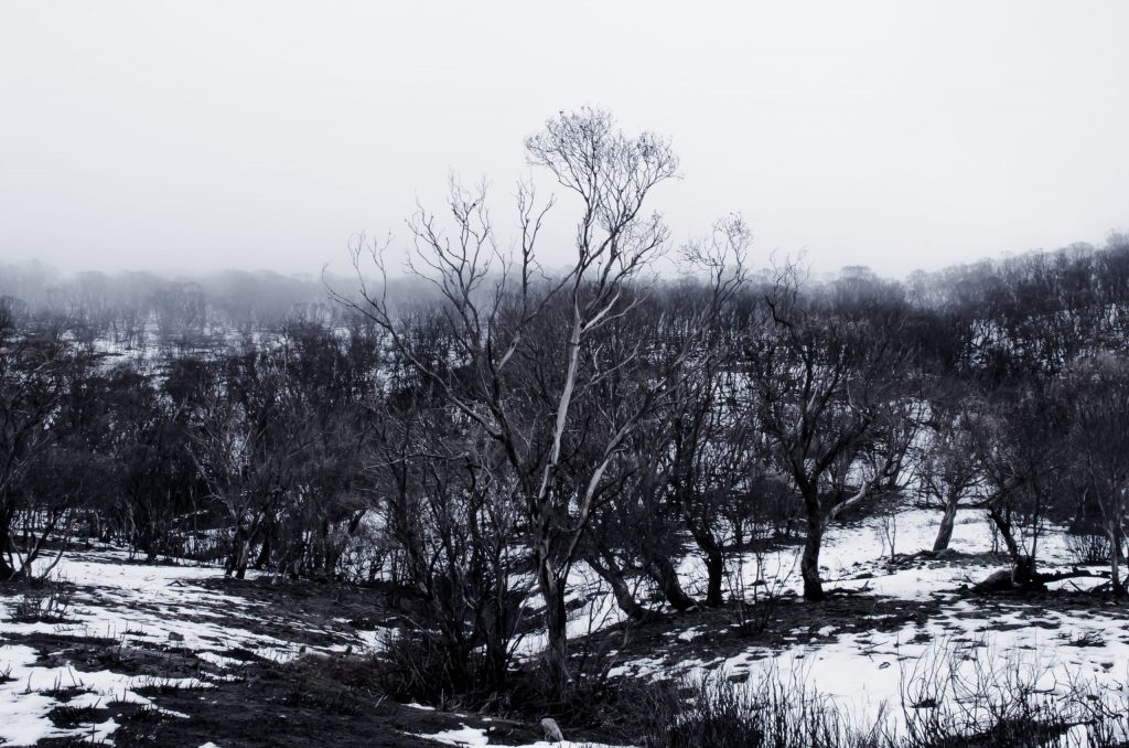 Burnt bush landscape with small amount of snow.