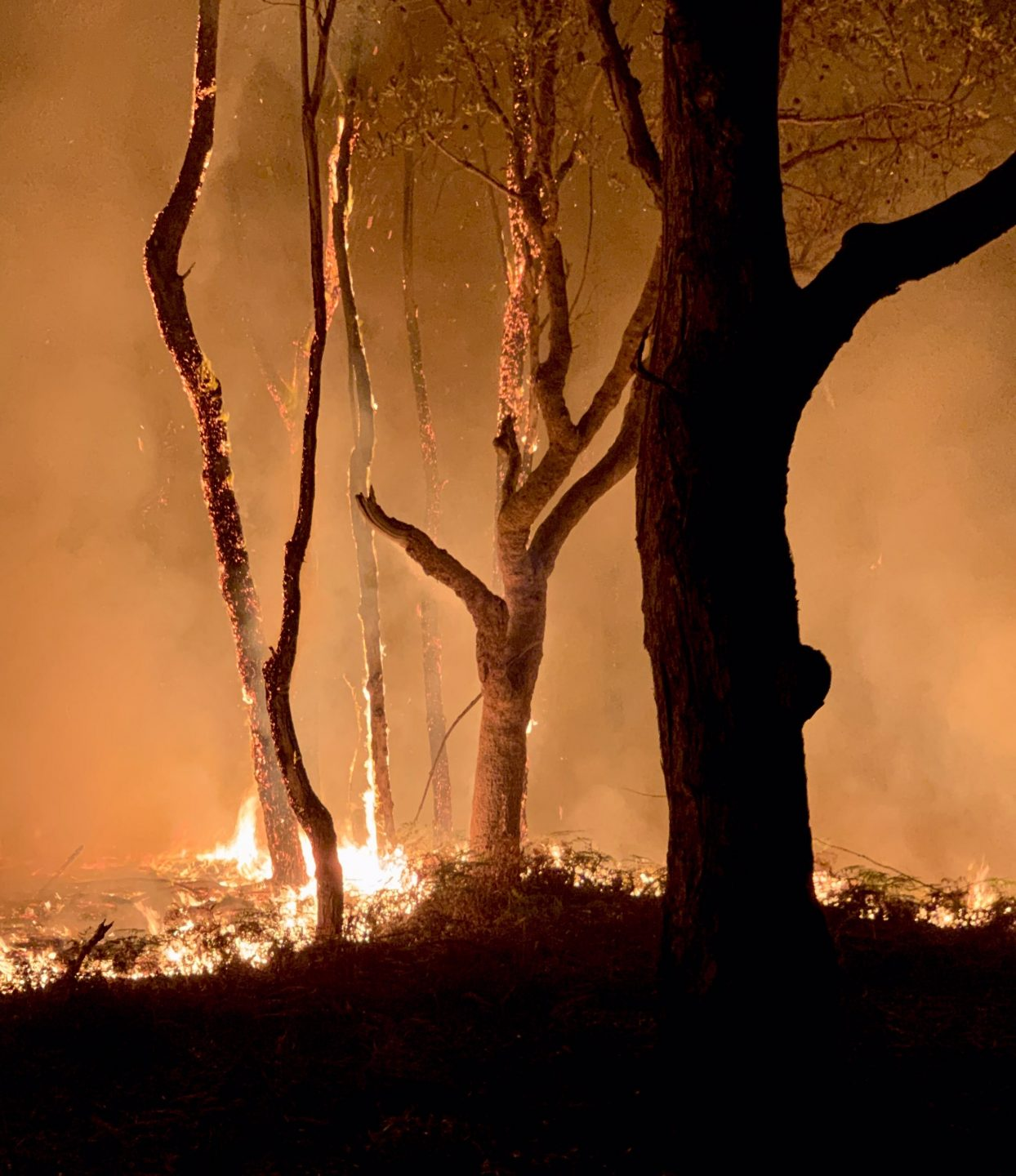 five tree trunks silhouetted in a bush fire