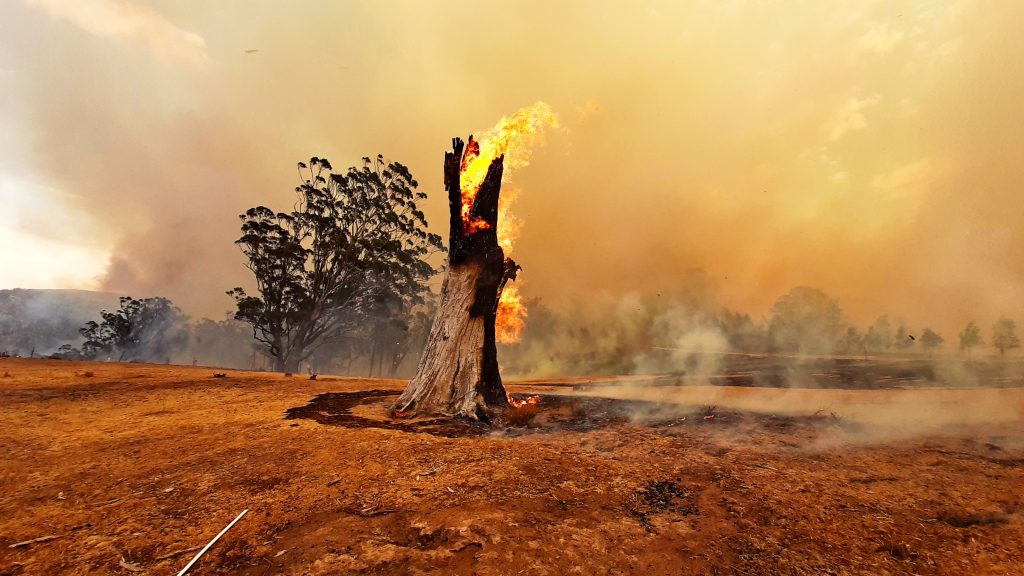 A burned tree trunk on fire in the middle of a burned landscape.