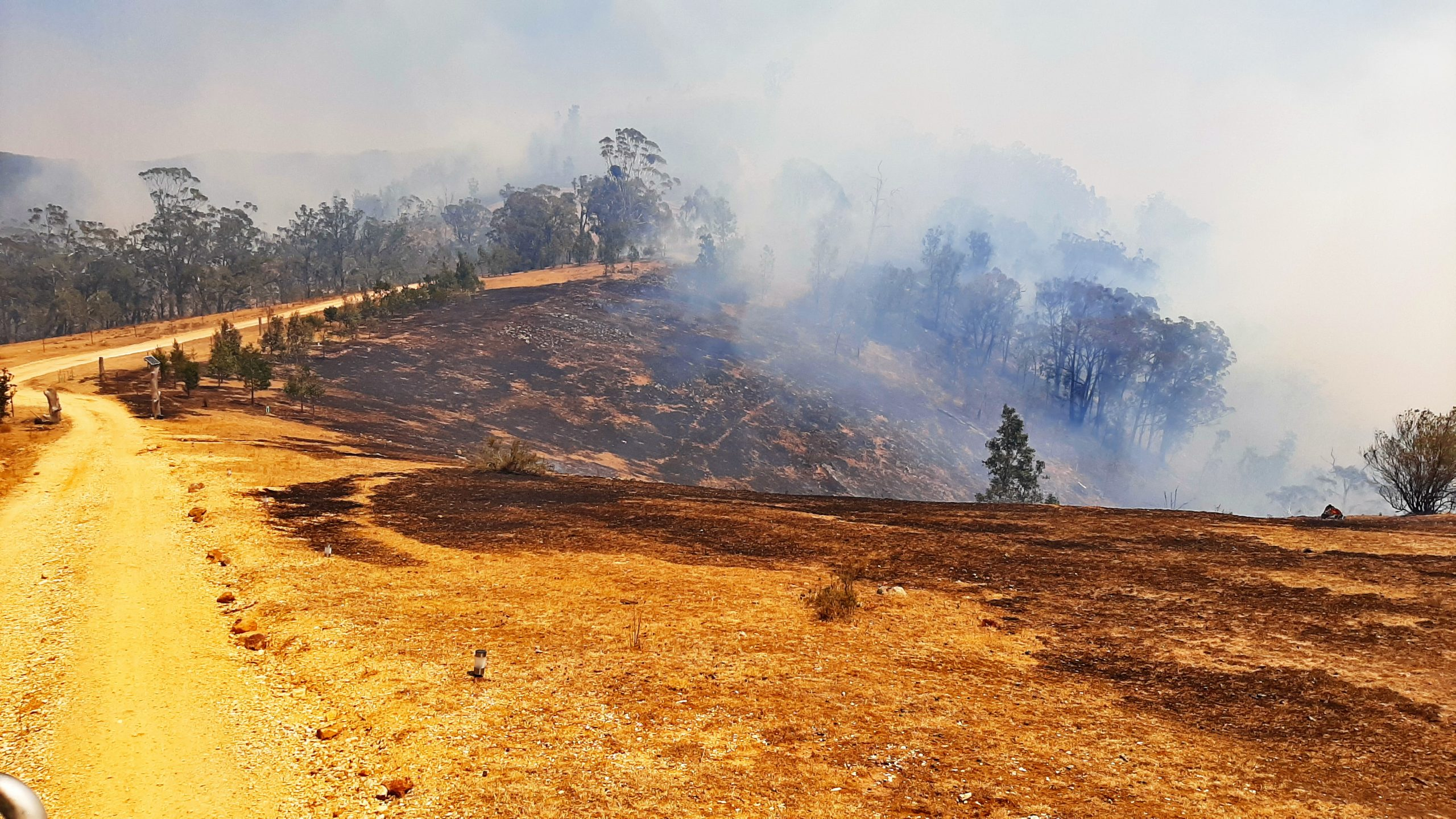 A burned landscape in New South Wales.