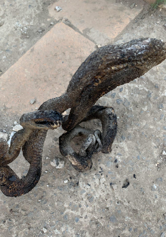 Burnt dead snake on concrete