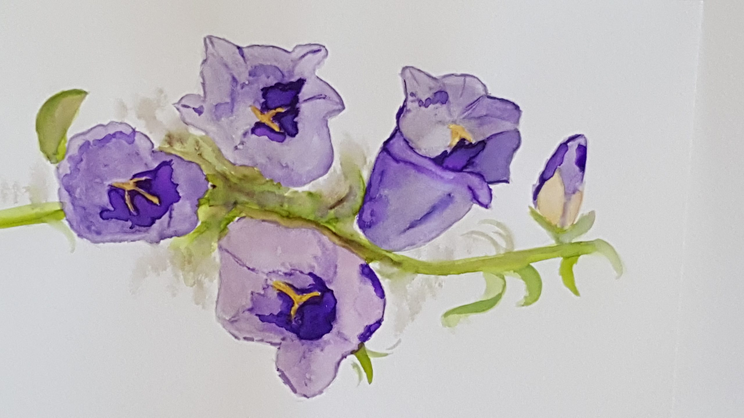 a watercolour drawing of purple violets.