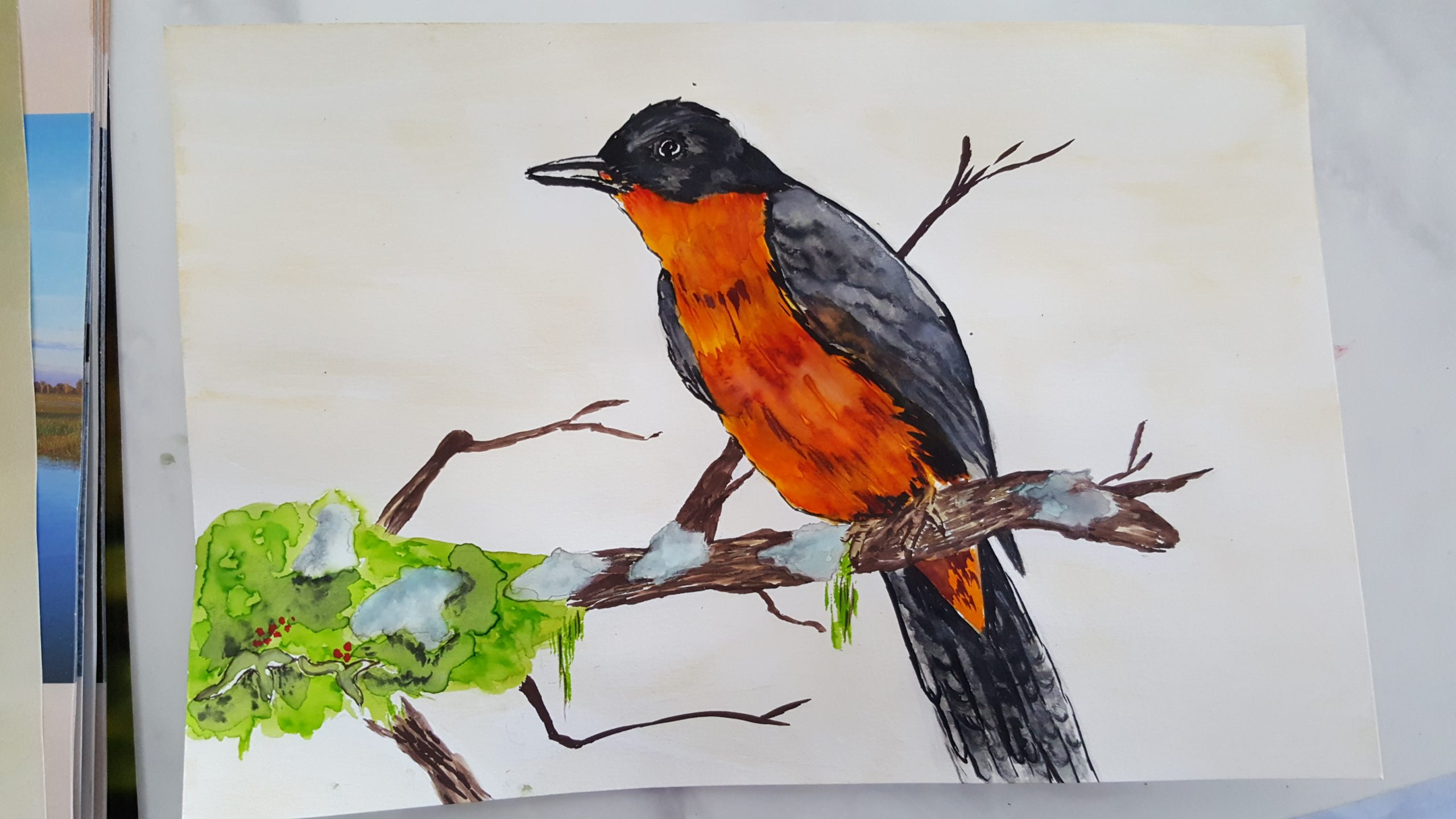 a watercolour painting of a bird perched on a branch with a deep orange chest and black outer feathers.
