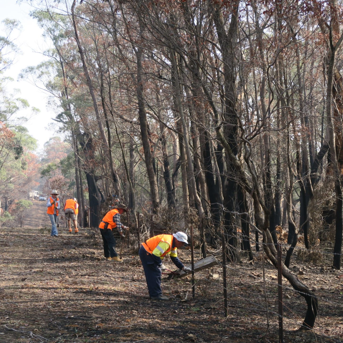 A landscape blackened by fire, with charred trees. Four figures wearing high-vis, bending down, repairing fences.