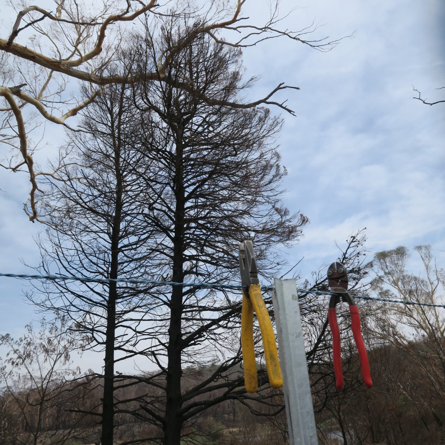 Two blackened trees in the background and a charred landscape behing. There is a line with seccateurs hanging off it.