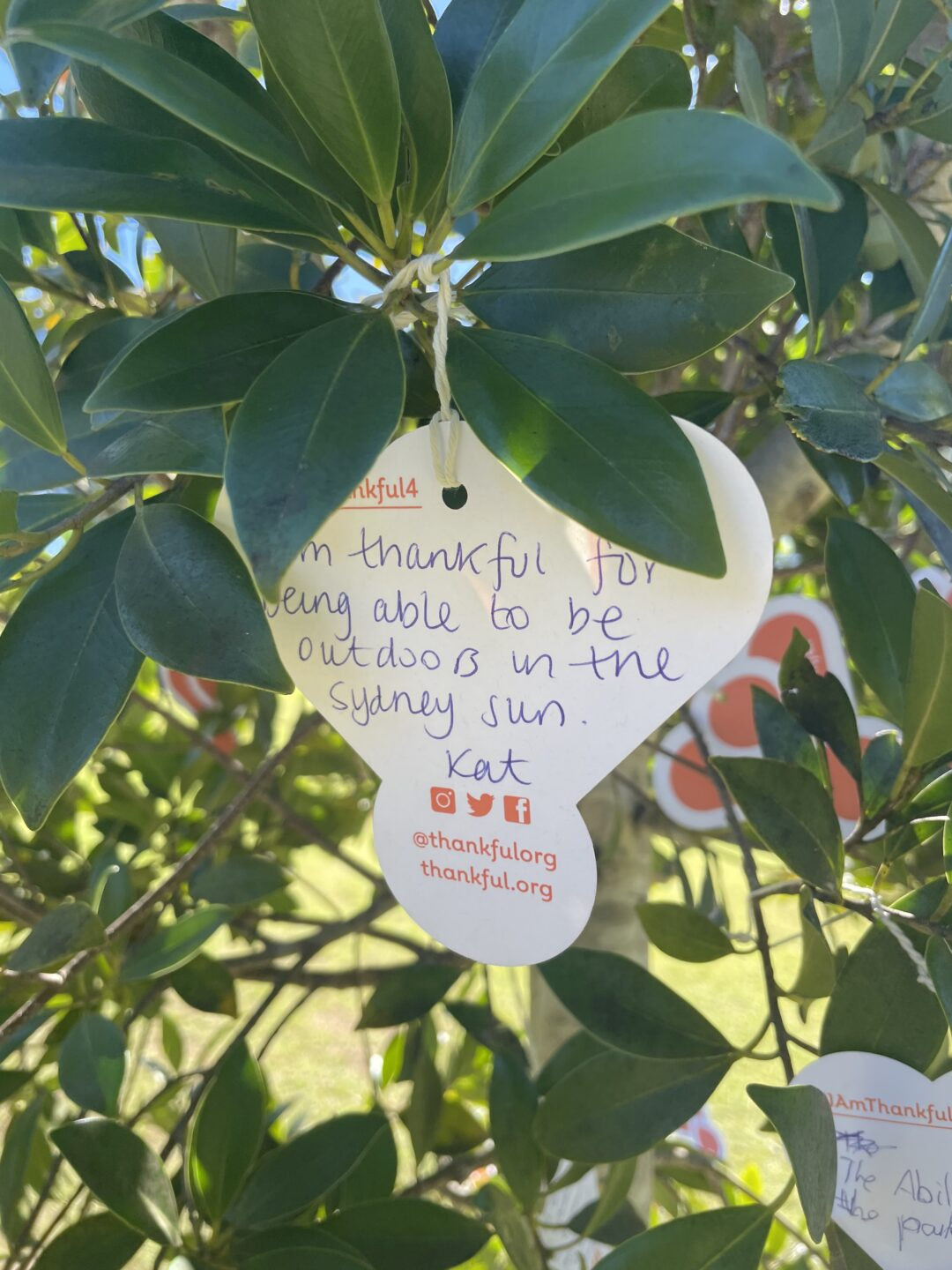 Paper message tied to tree with. Reads 'I'm thankful for being able to be outdoors in the Sydney sun'.