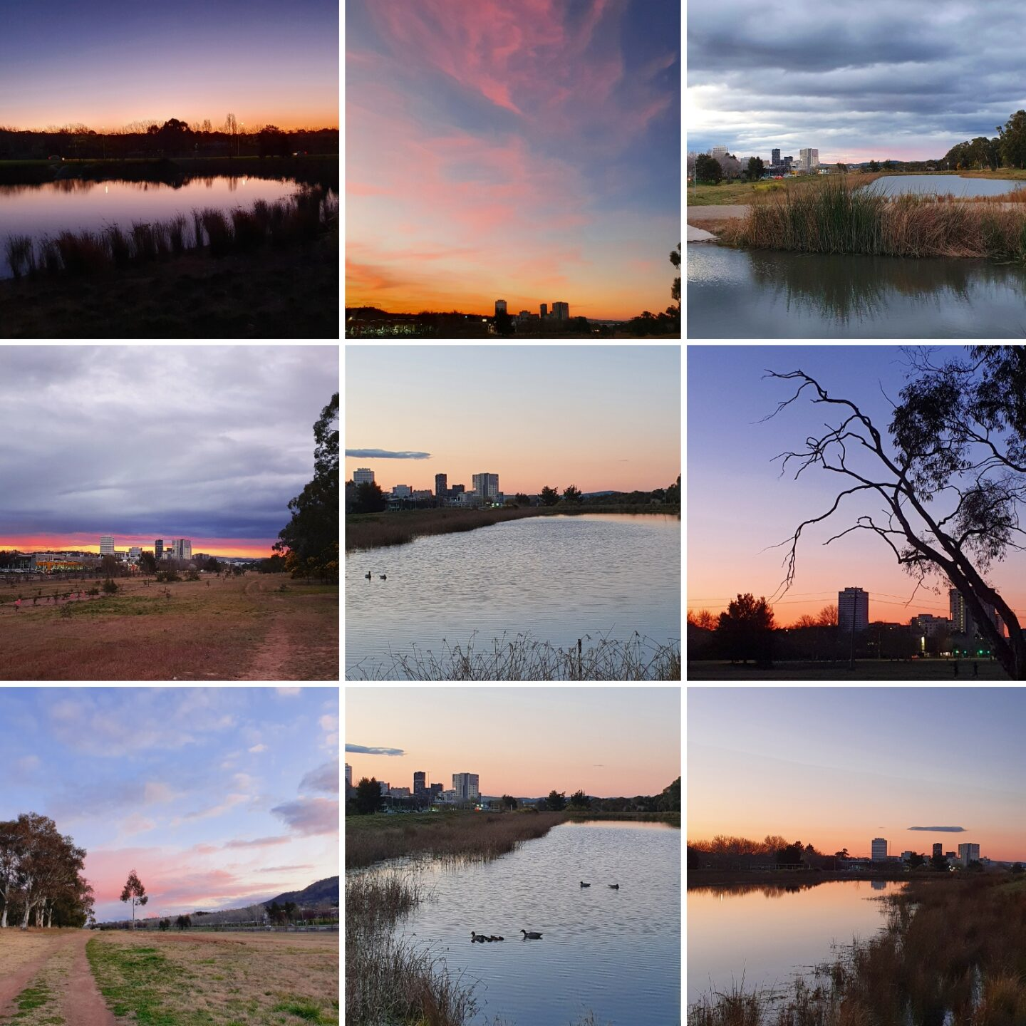 a collage of images of mawson ponds - a wetland in the ACT.