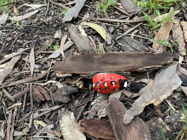A rock painted as a ladybug.