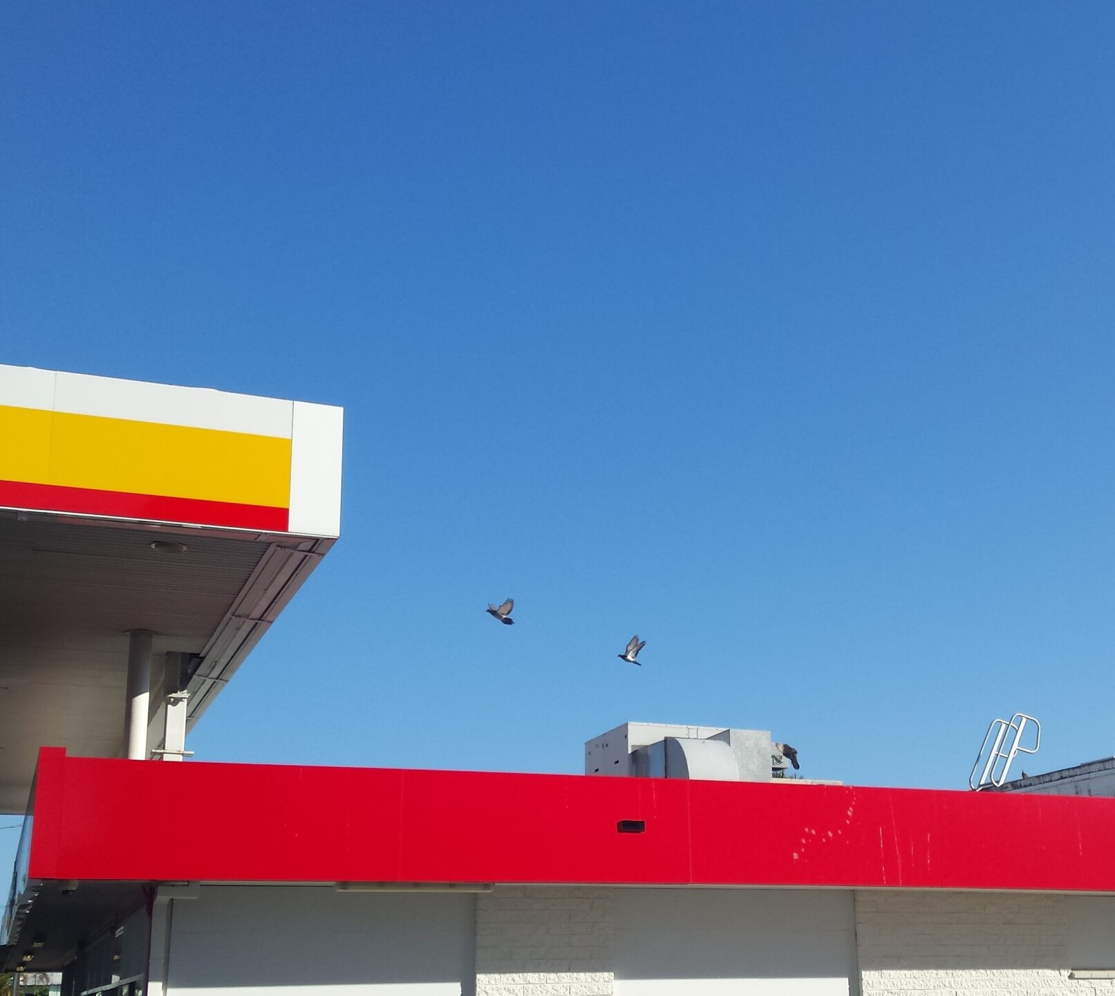 Blue sky, building rooflines, two birds flying.